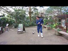 This adorable penguin is determined to catch up with her zookeeper friend. | This Video Of A Penguin Chasing Her Human Friend Is The Absolute Cutest