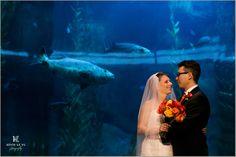 Long Beach Wedding Photography Photographer Aquarium Of The Pacific Ocean 5
