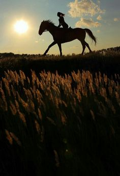 Silhouette of a girl riding a horse in a field
