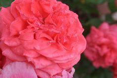 Pink Pink Pink :)