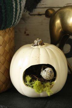 bird nest pumpkin