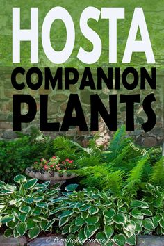 Learn the best perennials to plant with Hostas in your shade garden. This list of Hosta companion plants has perennials, shrubs, vines and annuals so you're sure to find something that will look good in your yard. #fromhousetohome #shade #garden #plants #hostas #shadegarden Partial Shade Perennials, Shade Flowers Perennial, Shade Loving Shrubs, Shade Shrubs, Best Perennials, Flowers Perennials, Shade Plants, Cool Plants, Planting Flowers