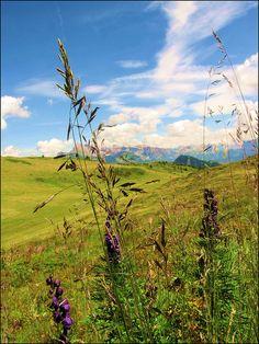 Trentino Alto Adige - Alpe di Siusi - Italy
