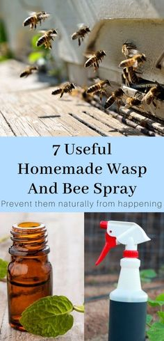 7 Useful Homemade Wasp And Bee Spray – Kill Them Safely Homemade essential oils bee and wasp killer spray. Recipes that can be made at home with household products. Bee Killer, Wasp Killer, Wasp Traps, Bee Traps, Carpenter Bee Spray, Natural Bee Repellent, Wasp Deterrent, Insect Repellent, Getting Rid Of Bees