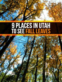 Fall foliage hotline. If you're thinking about taking a fall drive to see the…