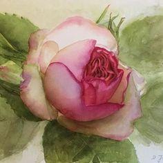 Eden Rose #watercolor #painting #aquarelle #edenrose #pink #roses #rose #art #artforsale #originalart #watercolours