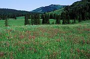 Robin and Arlene Karpan: Photos and images of the Cypress Hills in Saskatchewan, Canada
