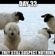 day-33-they-still-suspect-nothing