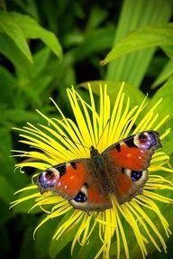 .❦.Butterfly ❦