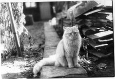 Miren que cara :)         Cine - Gatos - Angelb