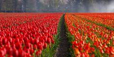 Good Morning Twitter friends, enjoy this flowers