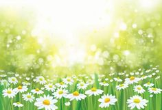 Our spring backdrops are great additions to your photo shoot. Spring becautiful flowers at different colors, green grass. Best spring backdrops are here! Easter Backdrops, Muslin Backdrops, Custom Backdrops, Photography Backdrops, Photography Photos, Green Grass Background, Different Colors, Bright Colors, Backdrop Stand