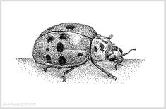 This is an example of stippling, likely drawn using a pen.