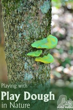 Playing with Play dough in Nature - Tips to teach your kids about the forest