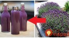 Lavender Recipes, Russian Recipes, Diy Birthday, Healthy Drinks, Aloe Vera, Herbalism, Drinking, Beverages, Fiber