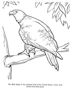 Bald Eagle Coloring Pictures And Sheets