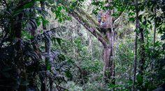 Im Wald von Turrialba.