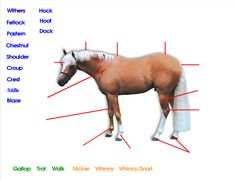 Horse #Body Parts Games Horse #Anatomy Game