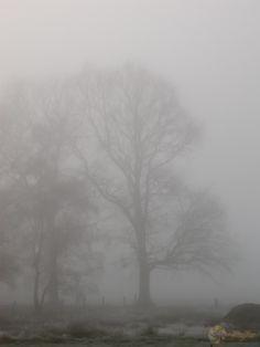 Novembermorgen - Bäume im Nebel - Am Monitor hat mir das Bild schon immer gefallen, auch wenn es hochkant war. Was mich dann doch überrascht hat, war die Qualität, mit welcher …  - zuerst erschienen auf fotoglut.de