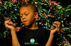 Where are all our butterfly friends traveling to? Find out in Charlotte Nature Museum's Butterfly Pavillion. Click here to watch local reporter Rob Tanner visiting the facility with his kids, as shown on WCNC.