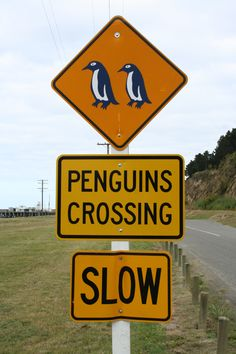 funny road signs | Papaleng Thoughts-Unplugged: 20 Strange and Funny Road Signs