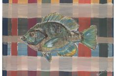 Bluegill on Earth Tone Plaid 17.5x11.5 Poster of by JsArtDesigns