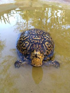 Turtles purloined from Flamingo Gardens mysteriously returned