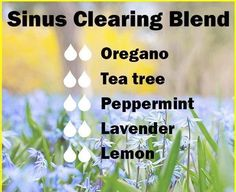 Sinus Clearing Essential Oils Diffuser Blend ••• Buy dōTERRA essential oils online at www.mydoterra.com/suzysholar, or contact me suzy.sholar@gmail.com for more info.