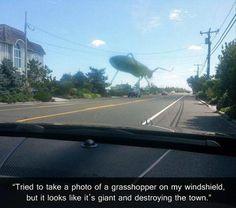 Grasshopper funny
