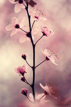I love Cherry Blossom!
