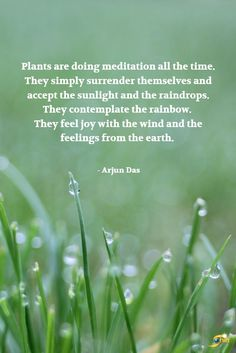 Plants are doing meditation all the time. They simply surrender themselves and Famous Quotes For Success Happy Thoughts, Deep Thoughts, Famous Quotes, Best Quotes, Nature Is Speaking, Life Affirming, Garden Quotes, Pretty Quotes, Mindfulness Meditation