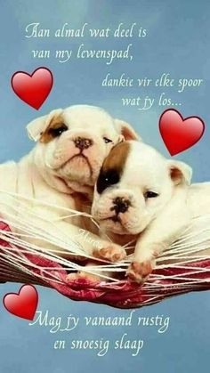 Discover recipes, home ideas, style inspiration and other ideas to try. Cute Good Night Quotes, Tuesday Quotes Good Morning, Romantic Good Night, Good Night Prayer, Good Night Blessings, Good Night Wishes, Good Night Sweet Dreams, Cute Quotes, Good Morning Picture