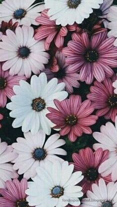 Ideas For Flowers Photography Quotes Nature Flor Iphone Wallpaper, Cute Wallpaper Backgrounds, Tumblr Wallpaper, Cool Wallpaper, Phone Wallpapers, Cute Wallpapers, Floral Wallpapers, Baby Wallpaper, Cellphone Wallpaper