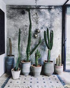 « Le monde entier est un 🌵 Tall Cactus, Indoor Cactus, Cactus Flower, Indoor Plants, Cacti And Succulents, Planting Succulents, Cactus Plants, Planting Flowers, How To Grow Cactus