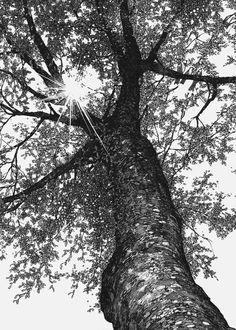 Art by Inoue Takehiko #nature #tree #forest #Inoue_Takehiko