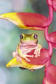 the_frog_princess_11.jpg (700×1050)