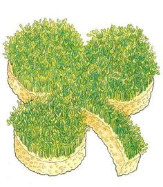 Lucky Sprouts - A shamrock is one of the classic symbols of good luck on St. Learn how to grow your own lucky sprouts in this great craft for kids. March Crafts, St Patrick's Day Crafts, Spring Crafts, Preschool Crafts, Holiday Crafts, Holiday Fun, Crafts For Kids, Holiday Activities, St Pattys