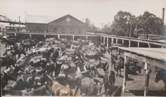 Pictures: The World War I British war horse came from Newport News. -- Mark St. John Erickson