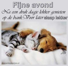 1000 Images About Fijne Avond On Pinterest Funny Cat