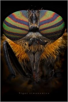 Patterns & Textures in Nature ~ Amazing Insect Images By Igor Iwanowicz