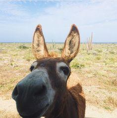 Happy day from Aruba!