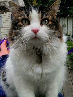 Lily Cat | Pawshake