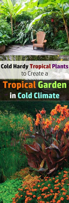 If you love to have a tropical garden like setup and you live in a cold climate then grow these cold hardy tropical plants to create a tropical garden in a cold climate. tropical garden ideas 14 Tropical Plants to Create a Tropical Garden in Cold Climate Cold Climate Gardening, Organic Gardening, Vegetable Gardening, Urban Gardening, Tropical Landscaping, Tropical Plants, Tropical Gardens, Landscaping Ideas, Tropical Patio