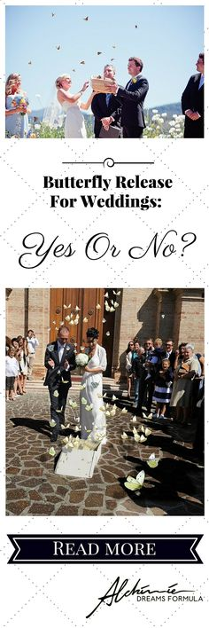 Butterfly Release For Weddings: Yes Or No? Read more!