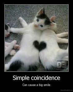 Coincidence photo of kittens with a lot of heart