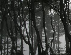 Photograph: Trees in Fog - Black and White - Original Photography Print on Vellum