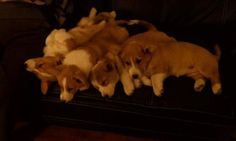 Oh my... an adorable pile of love!