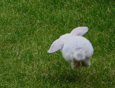 A white rabbit hopping through the grass.
