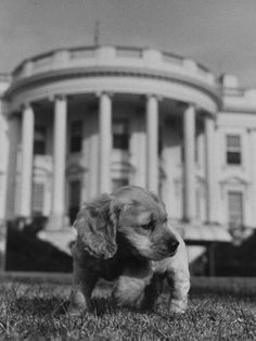 See these adorable photos of presidential pets throughout history! (This pup is Feller Truman, on the White House lawn.)