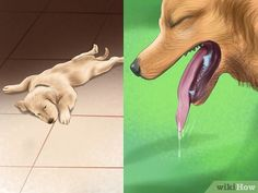 Image titled Treat Heat Stroke in Dogs Step 3